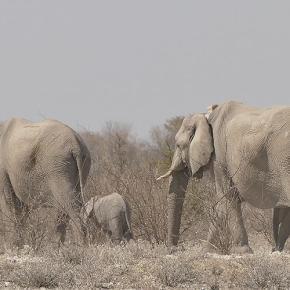 Quer durch den Etosha-Nationalpark