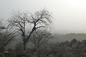 ... schwebt bei Kamanjab der Etosha-Staub durch die Luft.