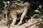 Affen können durchaus auch niedlich sein.
