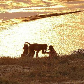 Rund um den Luangwa River