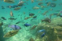 Unter Wasser fühlt man sich wie in einem großen Aquarium.