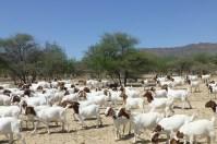 Der Anblick anderer Tiere ist eine schöne Abwechslung, nachdem wir in den letzten Wochen viele Rinder gesehen haben.