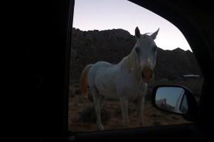 Es ist schon fast dunkel, als wir im Camp von den Wüstenpferden begrüßt werden.