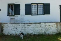 Das Weinviertel haben wir schnell hinter uns gelassen. In Tulbagh hält uns eine Wachkatze mit ihrem grimmigen Blick auf Distanz zum Weinausschank. Tut sie recht!
