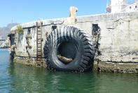 Entspannt sonnen sich die Robben im Hafen.