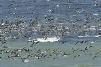Vögel gibt es im West-Coast-Nationalpark genug...