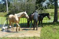 Nach der (Tor)tour mit den Touris werden die Pferde gepflegt.