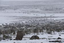 Ob des Schneefalls schauen die Tiere etwas verstört drein.