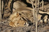 ... bevor sich die Tiere einen gemütlichen Schlafplatz suchen.