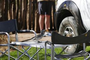 Noch ist der Reifen ganz und der Toko ist satt.