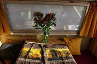 Ein Blumenstrauß und zwei neue Kissenbezüge zieren unser zu Hause seit Babsis Geburtstag.