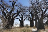 Auf einer Insel inmitten der Nxai-Salzpfanne: Baines Baobab.