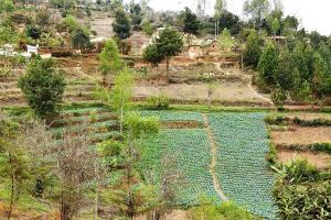 An den steilen Hängen der Usambara-Berge betreiben die Bewohner karge Landwirtschaft.