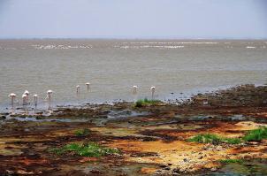 Im Ostafrikanischen Graben sind noch eine Reihe von vulkanischen Aktivitäten zu sehen, wie hier die heißen Quellen am Lake Manyara.