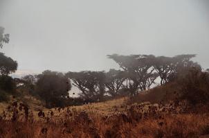 Noch wabert der Nebel zwischen den Bäumen...