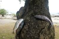 ... während andere noch im Baum hängen.