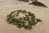 ... sind diese Wüstenpflanzen