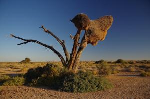 ... und von Namibia.