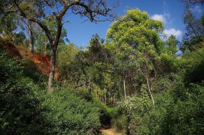 Die Wanderwege im Mlilwane-Nationalpark sind sehr abwechslungsreich.