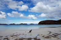 Was sucht das Känguru in der Karibik?