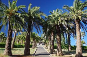 Die Ländereien der Seppeltfamilie sind mit uralten Palmen gesäumt.