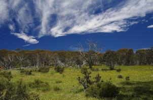 Beeindruckend: Eine Wildblumenwiese in den Australischen Alpen.