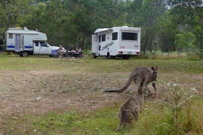 Die Kängurus frühstücken mit uns.