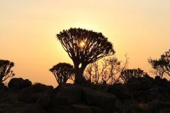 Im Köcherbaumwald waren herrliche Sonnenuntergänge zu sehen...