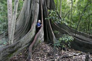 ... und alte Bäume konnten wir im Manning River Valley bestaunen.