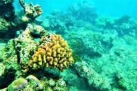 Es gibt sie doch noch – die bunten Korallen am Great Barrier Riff