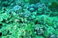 Bilderfeuerwerk am Great Barrier Riff