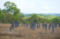 Das ist kein Friedhof, sondern Bauwerke von Kompasstermiten. Die Tiere sind blind und richten ihre Behausungen streng nach dem Magnetfeld der Erde in Nord/Süd Richtung aus.