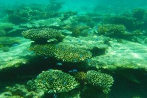 ... und formenreich präsentiert sich das Ningaloo Riff.