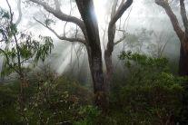 A004 Die Sonne kämpft sich durch den Nebel des Regenwaldes, Australien.