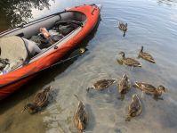 Die Enten haben ihren Lunch im Boot schon entdeckt.