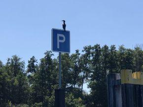 Jedem seinen Parkplatz!