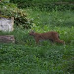 %name Wildpark Bad Mergentheim