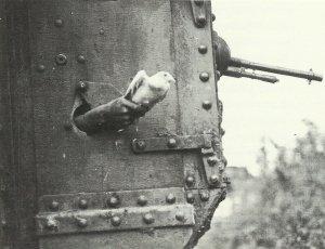 Brieftaube aus Panzer