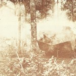 Saint-Chamond Panzer auf dem Matrsch