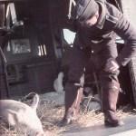Ju 52 Schweinetransporter