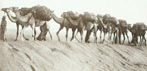Nachschubskolonne aus Kamelen