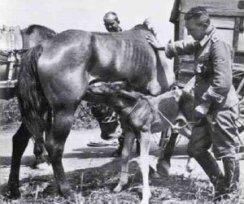 Angehörige der Polizei-Division während des Westfeldzugs.