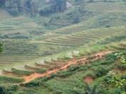 Die ersten Reisterrassen