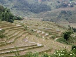 Reisterrassen so weit das Auge reicht