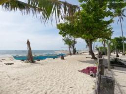 Abgebrochene Palmen überall von diversen Thaifunen