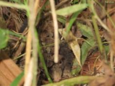 dieses Tierchen haben wir unterwegs entdeckt! Oposum?
