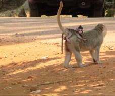 süße Affen