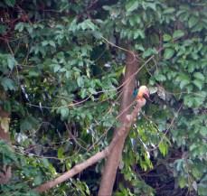 Noch mehr Kingfisher
