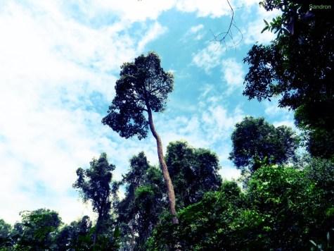 Miri / Sarawak / Malaysia - 13.05.15