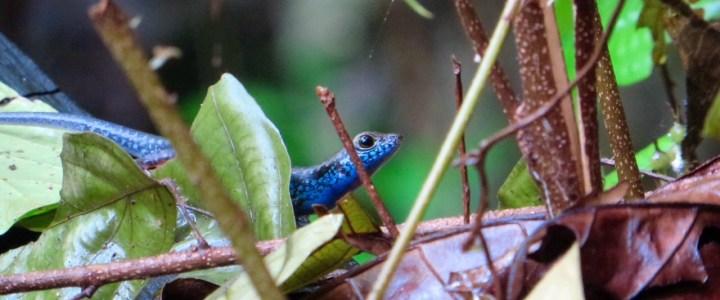 Natur Pur in Borneo